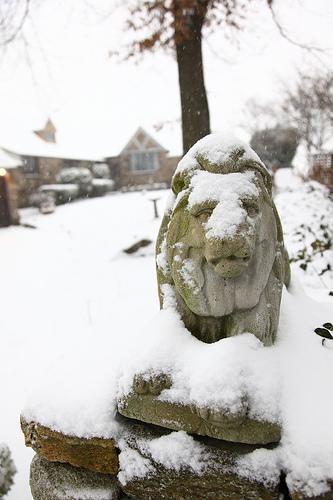 Frozen Lions